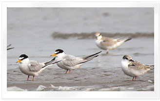 As a habitat for migratory birds photo